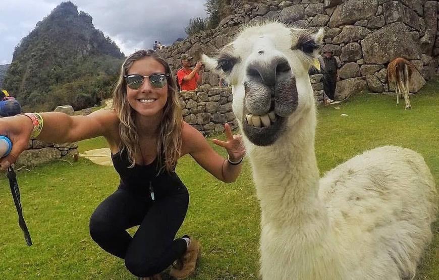 Cusco Machu Picchu Machupicchu Llama